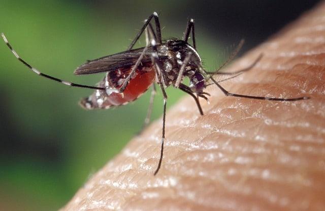 velas para los mosquitos